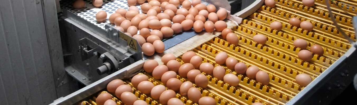 ASSEMBLY. Sistemas de transporte. Otros Sectores. Alimentación. Cintas transportadoras de huevos. Contenedor
